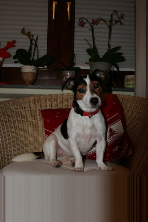 calli und pauline, 22.12.2009 009