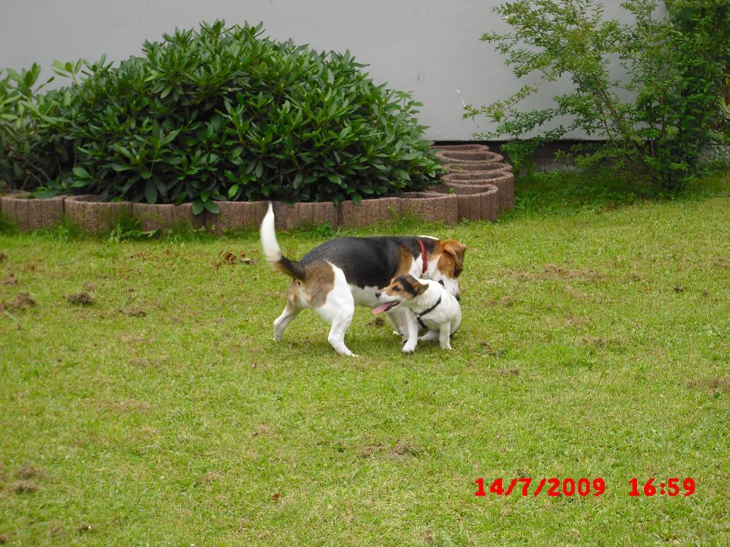 Eddie&Hummel018