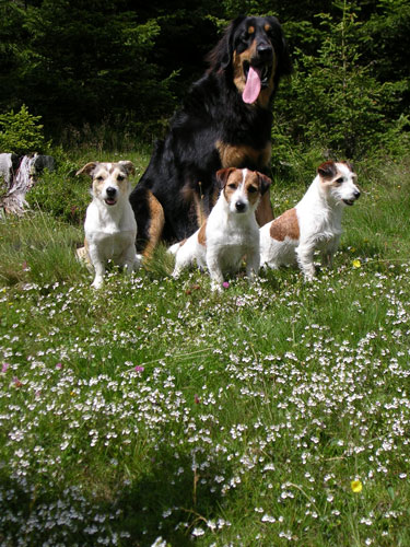 Hunde 005