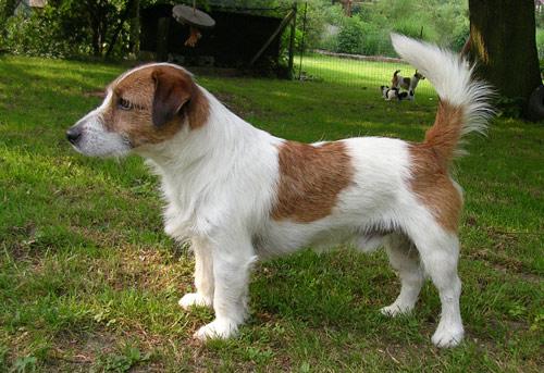 Hunde 022