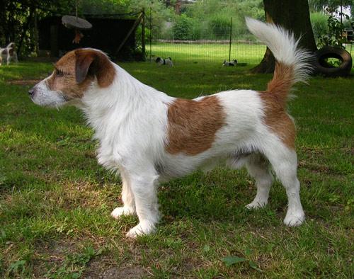 Hunde 025
