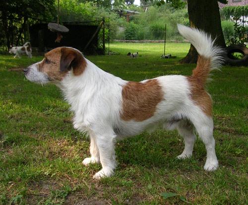 Hunde 026