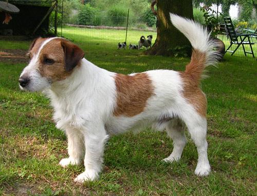Hunde 029