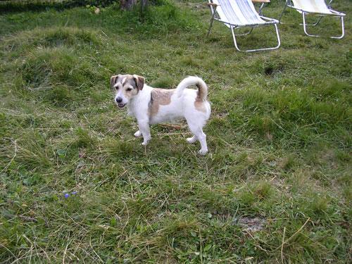 Hunde 037