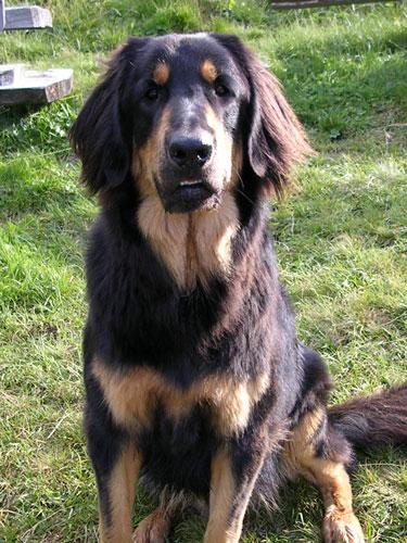 Hunde 055