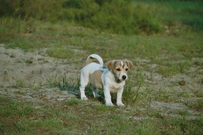 Hunde 066